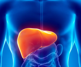 picture of the liver